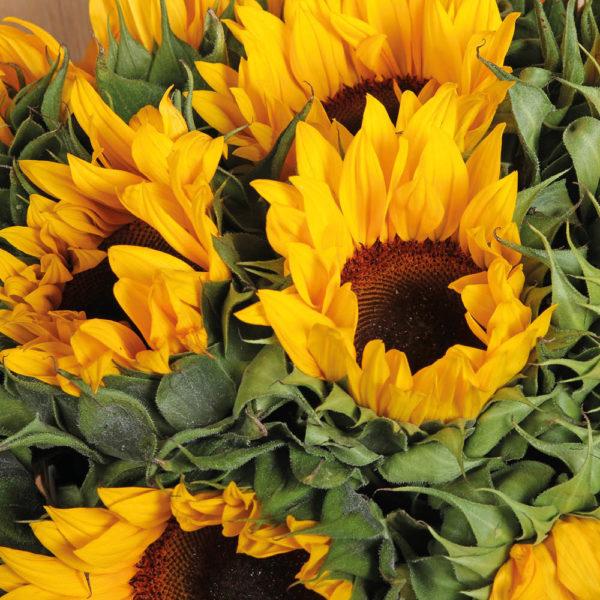 Rams Flowers-RF03-Sunflower Surprise-2